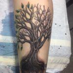 tree chris